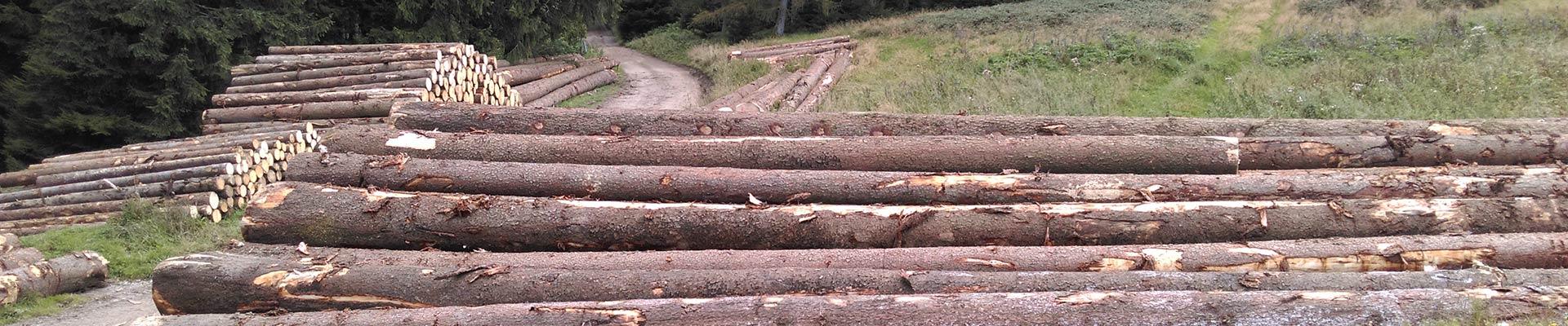 Holzergemeinschaft Bad Oberdorf Holzhandel