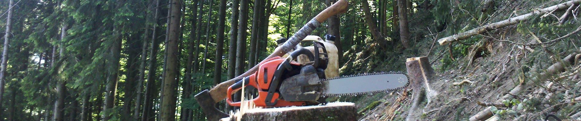 Leistungen Holzergemeinschaft Bad Oberdorf